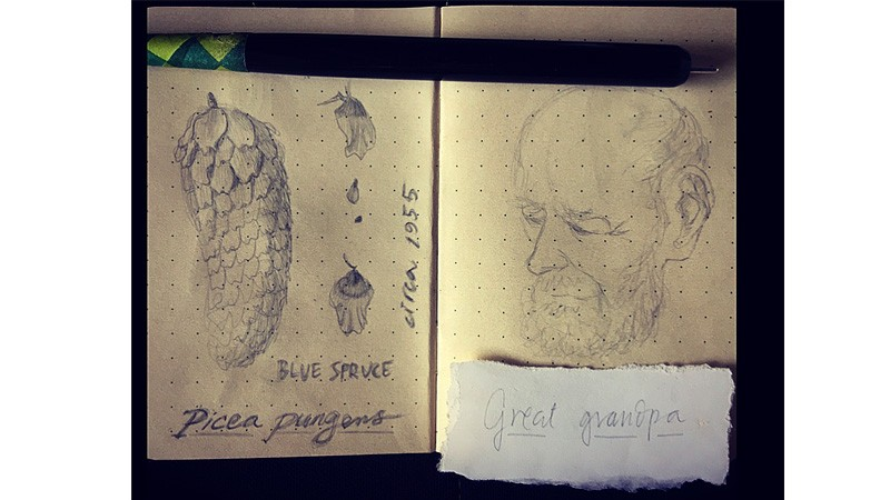 drawings2-800x450.jpg