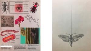 drawings800x450.jpg