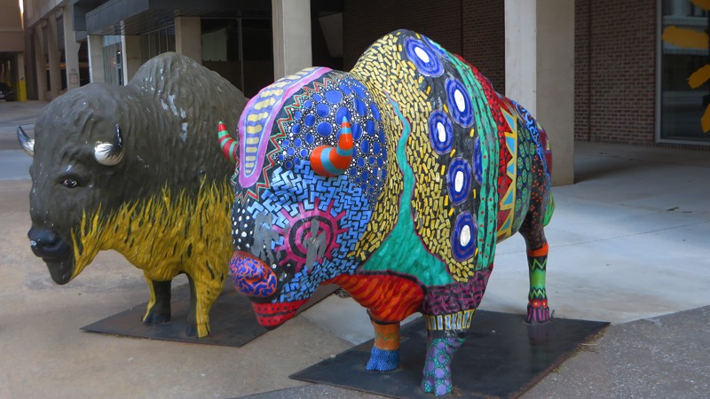 :  Painted buffalos, as part of a public art project, can be found throughout the city.
