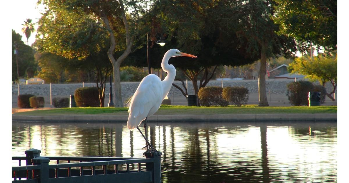 West Wetlands, Yuma, AZ