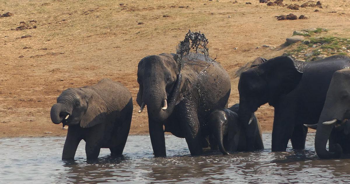 Elephants at Hwange Watering Hole