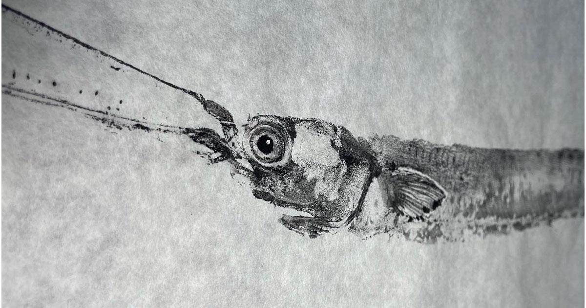 Gyotaku Print by Austin Armstrong