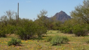 Tucson Sites on the Anza Trail
