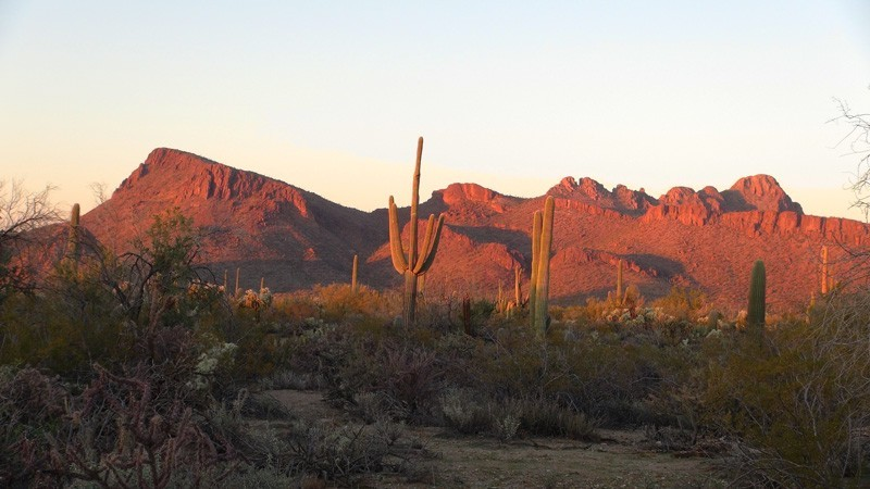 Southern Arizona Articles Archive