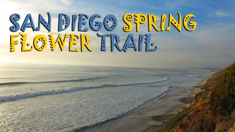 San Diego Spring Flower Trail