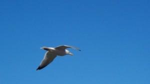 seagull800x450.jpg
