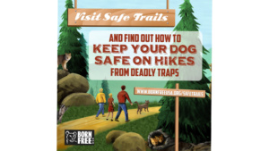 Keeping Trails Safe From Traps