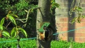 woodpecker800x450.jpg
