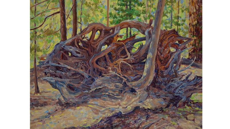 root800x450.jpg