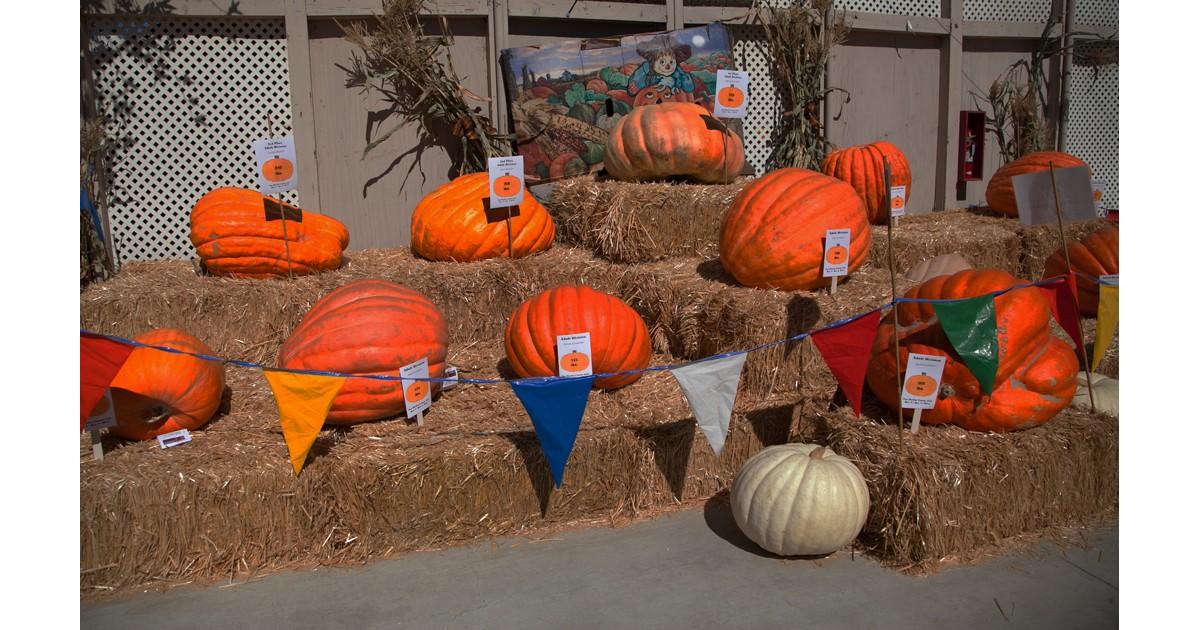 Pumpkins at San Benito County Fair