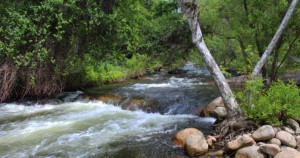 sycamore creek.jpg