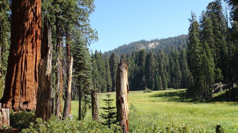 CaliforniaSequoiaRadio800x450.jpg