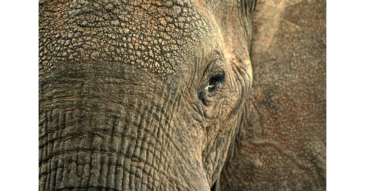 Elephant-Conservation-wp.jpg