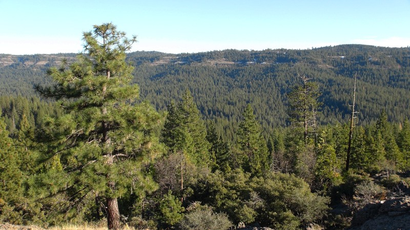 Stanislaus National Forest (800x450.jpg
