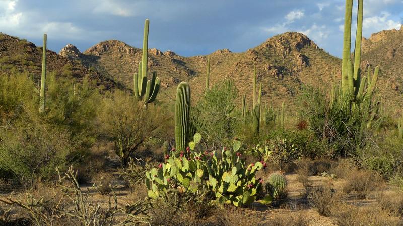 saguaroMain800x450.jpg