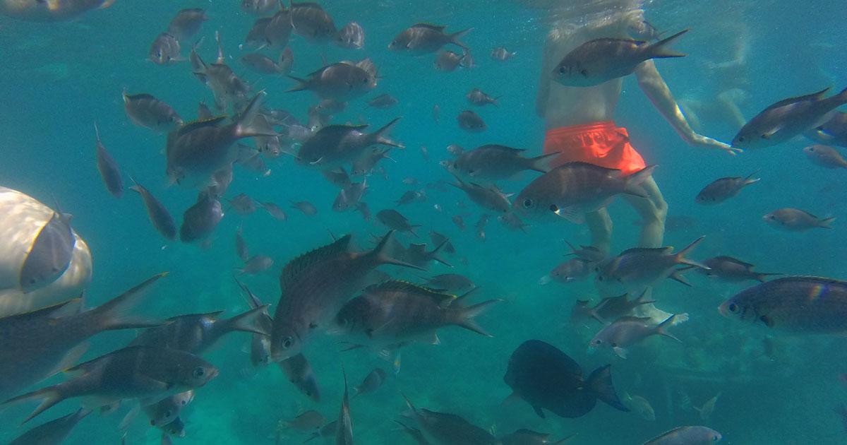 Curacao Sunken Tugboat Dive