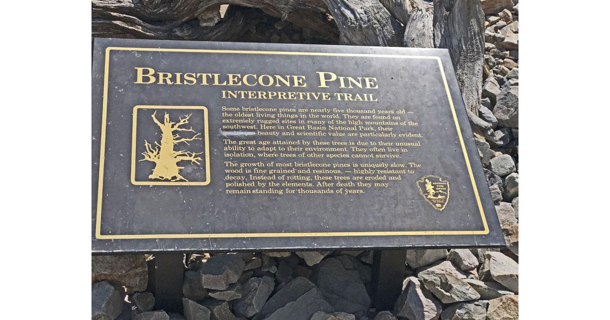 Bristlecone Pine interpretive trail