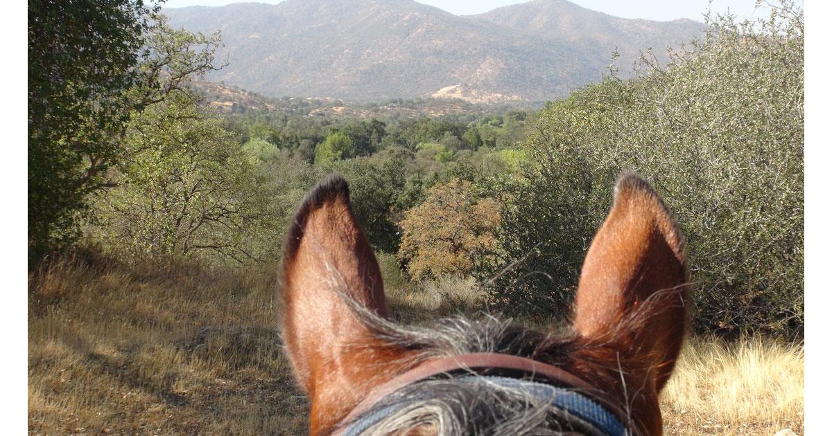 Horses Across America