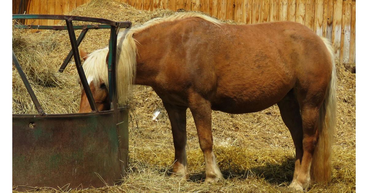 Farm Horse