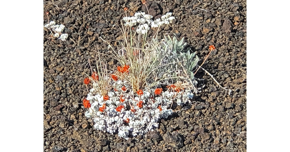 Find pockets of life among the lava fields.