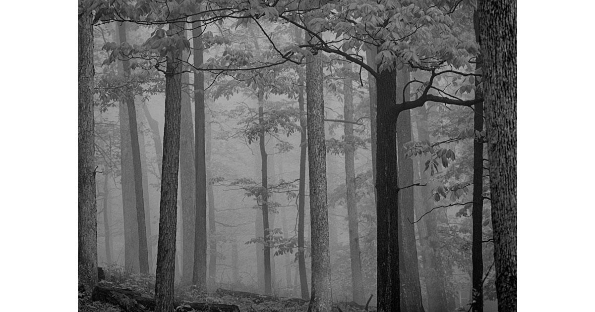 Fog Creeps through the Trees at Catoctin. Photo by Jim Schlett