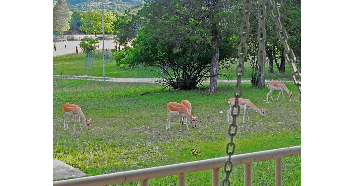 Front porch view of local wildlife