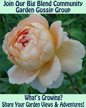 Garden Gossip Group
