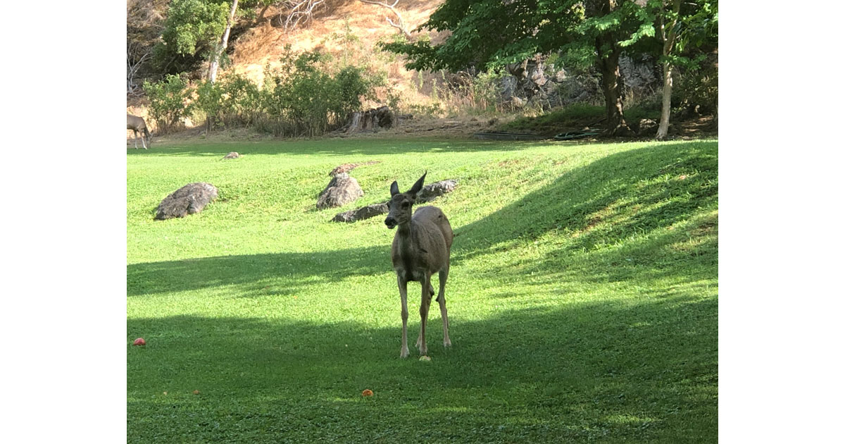 A visitor at Kirkwood Ranch