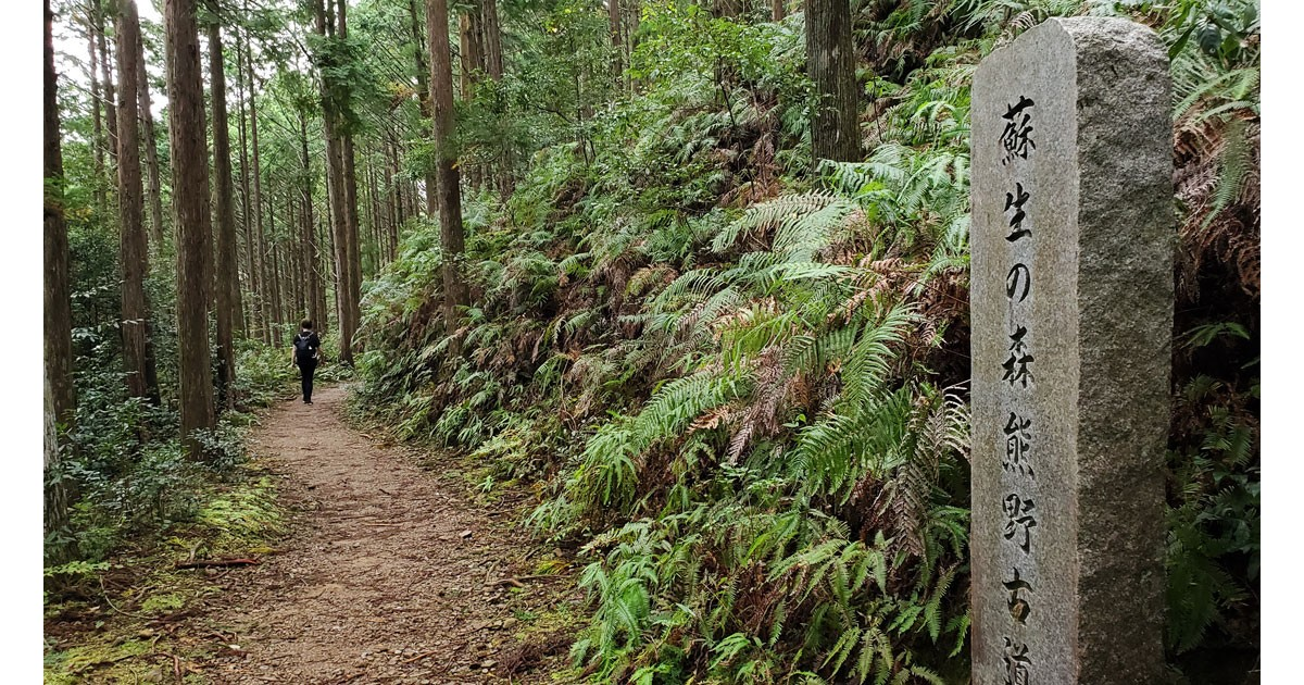 Kumano Trail in forest
