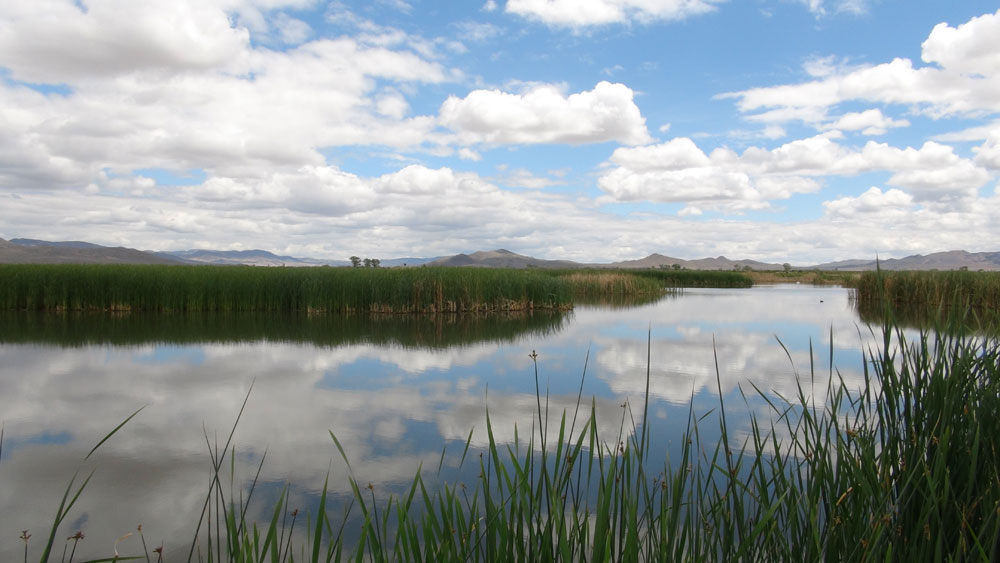 Mason Valley Wildlife Management Area