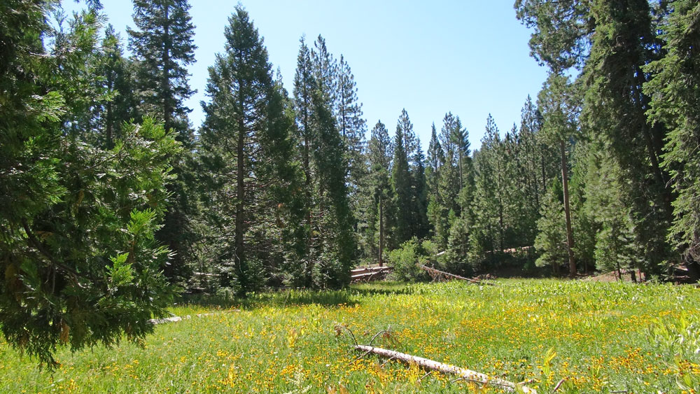 Sequoia National Forest Meadow