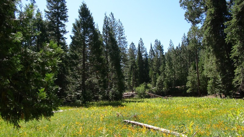 SEQUOIA_ANTIONAL_FOREST_MEADOW800x450.jpg