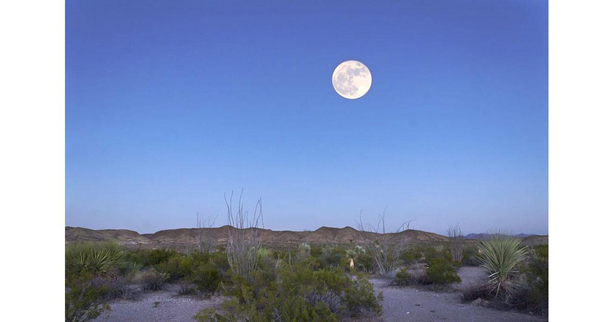 Super Moon in Octotillo Grove - Big Blend NP