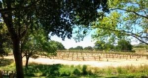 Fenestra Vineyards