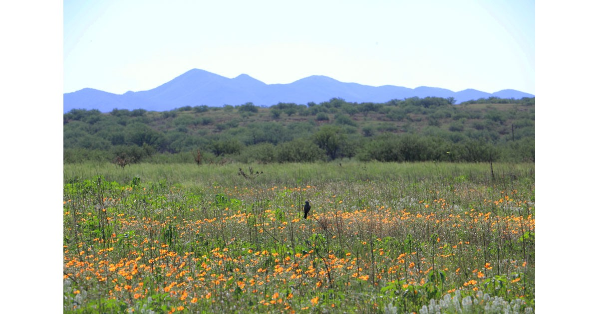 Wildflowers at Buenos Aires NWR