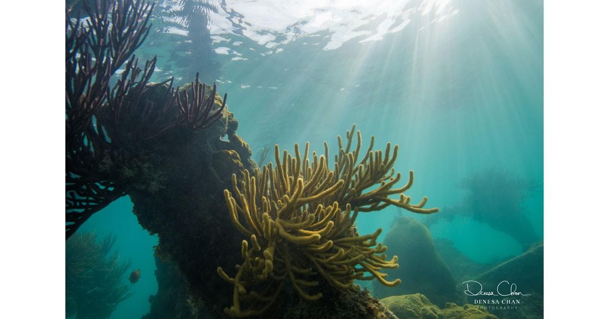 Loggerhead Key Dry Tortugas National Park Coral Reef Gargonian © Denesa Chan