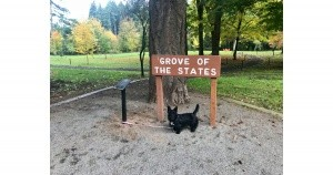 Oregon's Grove of the States