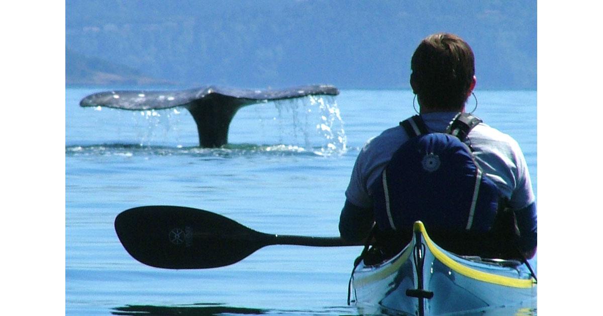 kayaking1200.jpg