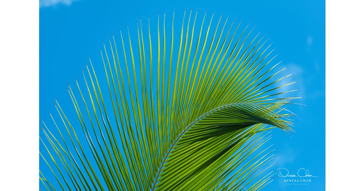 Loggerhead Key Dry Tortugas National Park Coconut Palm Abstract © Denesa Chan