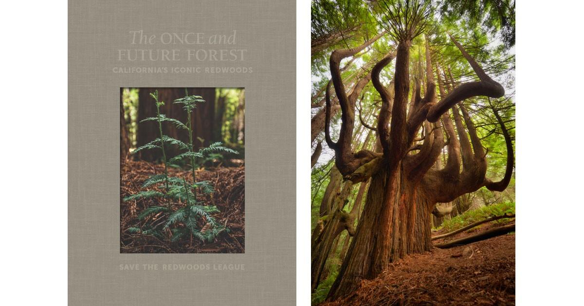 redwoodbooks.jpg