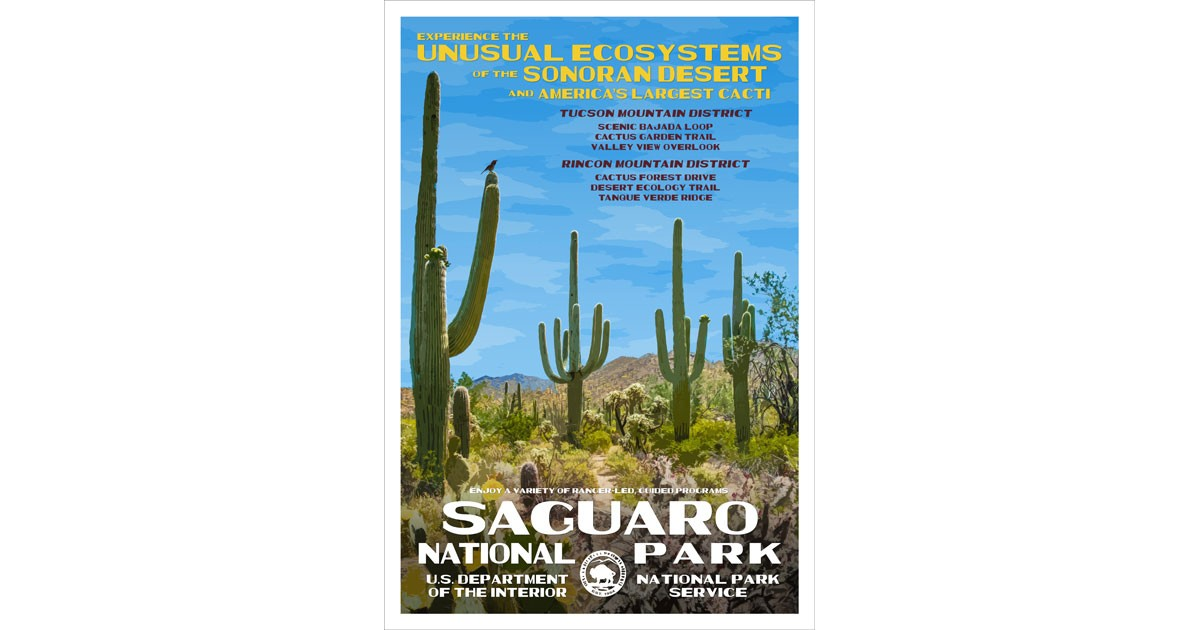Saguaro National Park by Rob Decker