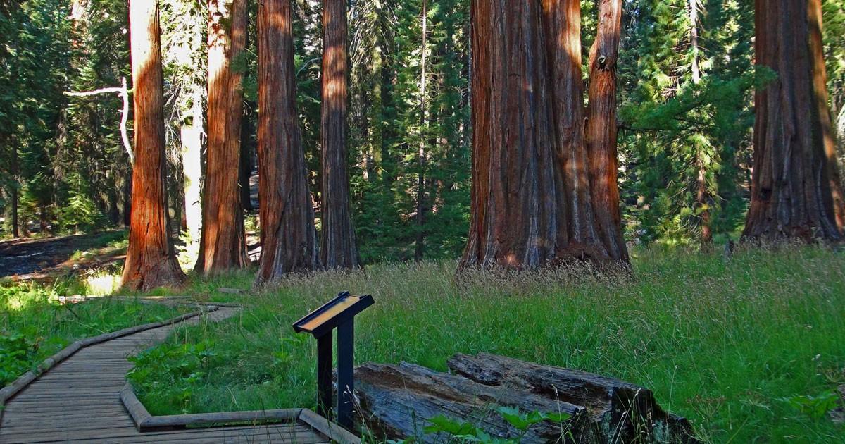 sequoiamain1200.jpg