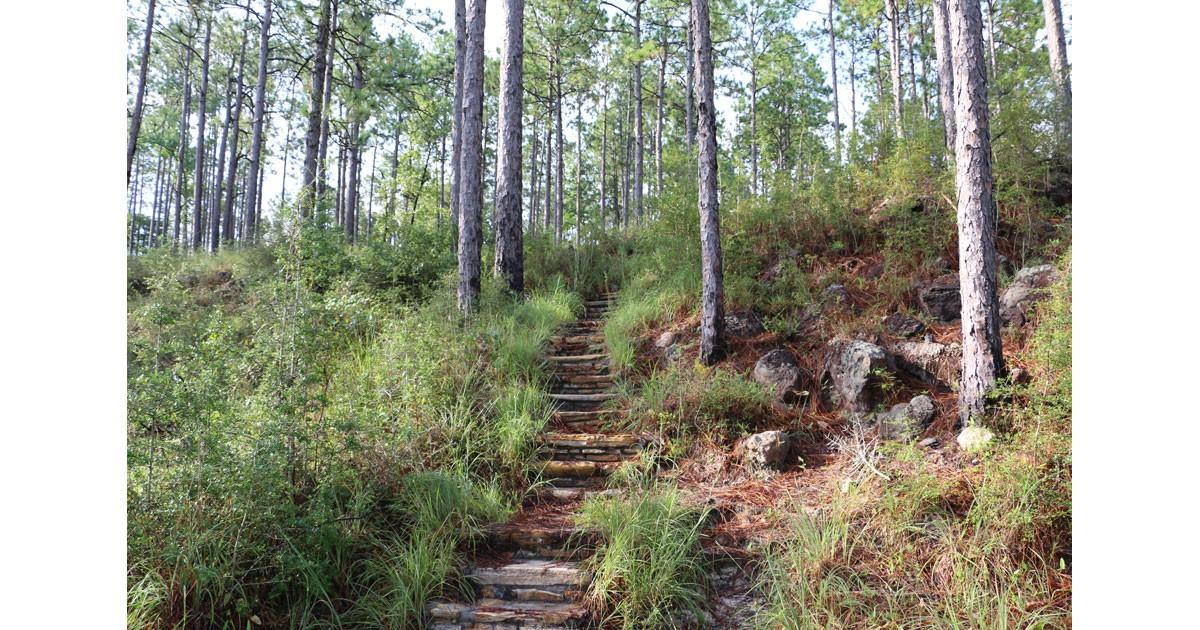 Longleaf Vista Trail