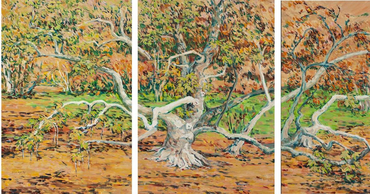 sycamoretree.jpg