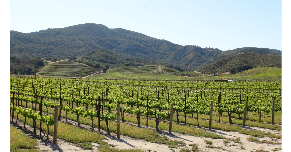 vineyardsb.jpg