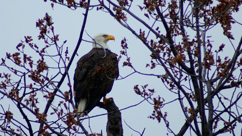 Washington DC National Park Units