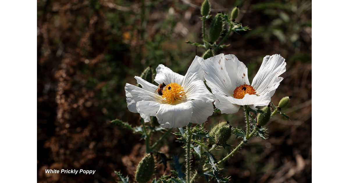 Wildflower Wonderland in Buenos Aires NWR | Parks & Travel Magazine